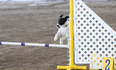 3-11-2018 Bloodhound-3434