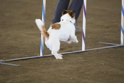 3-11-2018 Bloodhound-3454