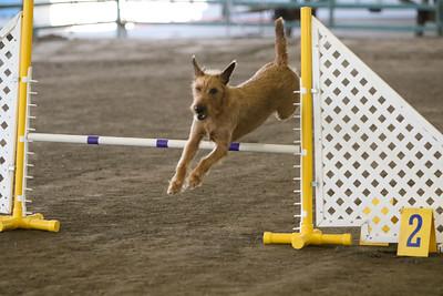 3-11-2018 Bloodhound-3429