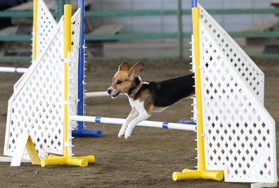 3-11-2018 Bloodhound-3440
