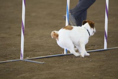 3-11-2018 Bloodhound-3453
