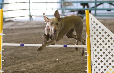 3-11-2018 Bloodhound-3424