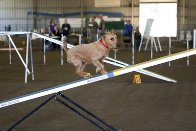 3-11-2018 Bloodhound-3272
