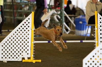 3-11-2018 Bloodhound-3254