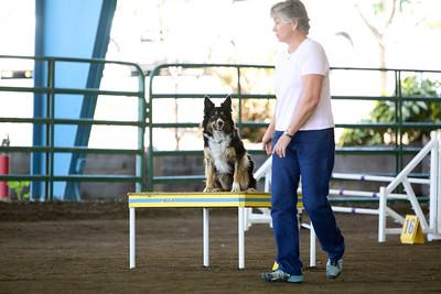 3-11-2018 Bloodhound-3225