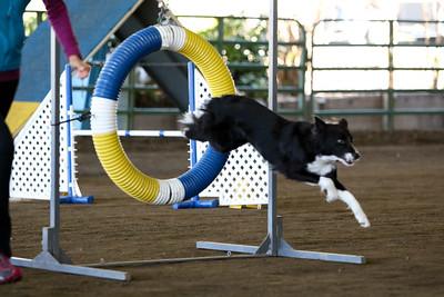 3-11-2018 Bloodhound-3235