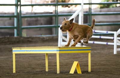 3-11-2018 Bloodhound-3257