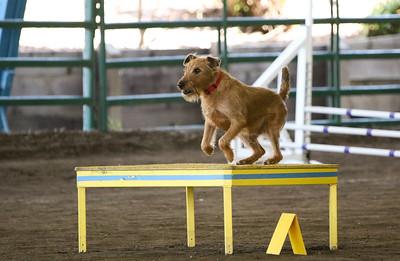 3-11-2018 Bloodhound-3258