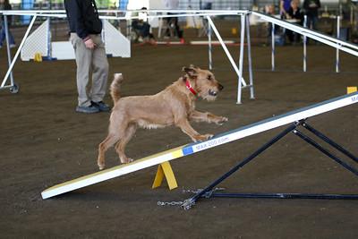 3-11-2018 Bloodhound-3270