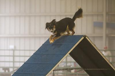 3-11-2018 Bloodhound-1498