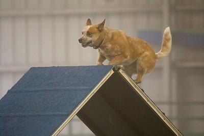 3-11-2018 Bloodhound-1481
