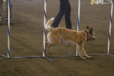 3-11-2018 Bloodhound-1491