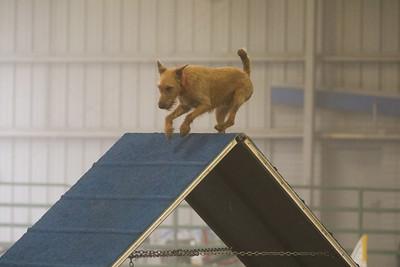 3-11-2018 Bloodhound-1494