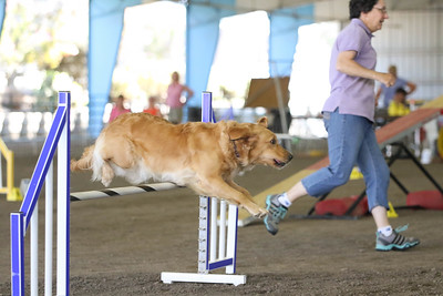9-1-18 NorCal Goldens-7978
