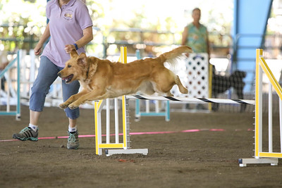 9-1-18 NorCal Goldens-7970