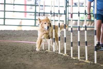 9-1-18 NorCal Goldens-7921
