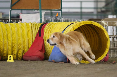 9-1-18 NorCal Goldens-7937