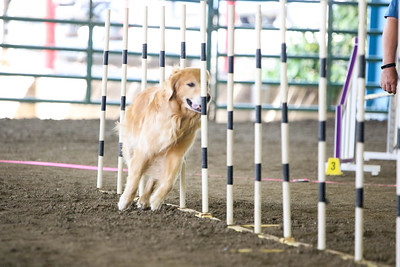 9-1-18 NorCal Goldens-7926