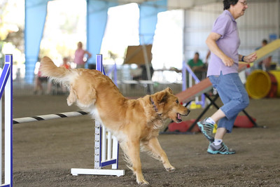 9-1-18 NorCal Goldens-7979