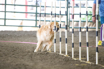 9-1-18 NorCal Goldens-7922