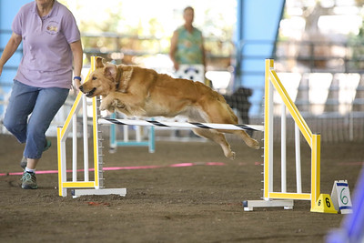 9-1-18 NorCal Goldens-7969