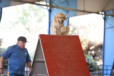 9-1-18 NorCal Goldens-8855