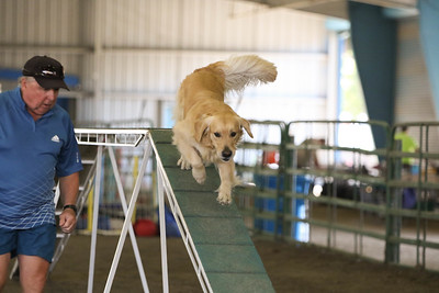 9-1-18 NorCal Goldens-8841