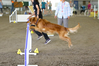 9-1-18 NorCal Goldens-8516