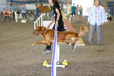 9-1-18 NorCal Goldens-8517