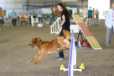9-1-18 NorCal Goldens-8518