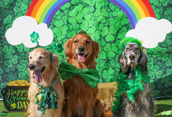 St Patrick's Day  Photo op