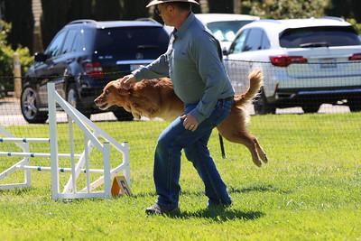 3-31-2018 Shetlant Sheepdog-4302