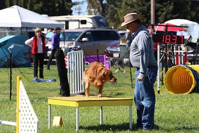 3-31-2018 Shetlant Sheepdog-3251