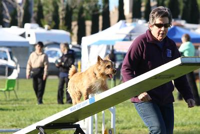 3-31-2018 Shetlant Sheepdog-2259