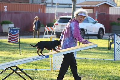 3-31-2018 Shetlant Sheepdog-1714