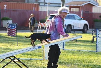 3-31-2018 Shetlant Sheepdog-1713