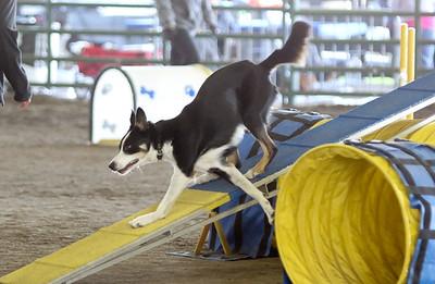 3-15-2015 Bloodhound-0719