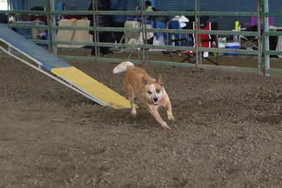 3-10-2019 Bloodhound-9708