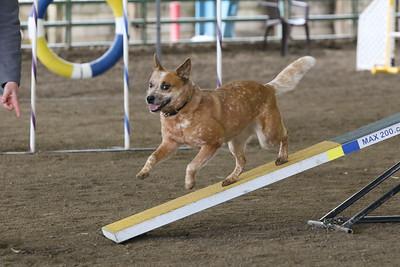 3-10-2019 Bloodhound-9719