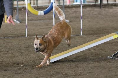 3-10-2019 Bloodhound-9720