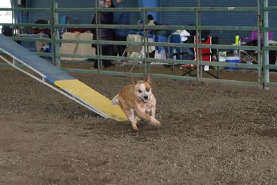 3-10-2019 Bloodhound-9707