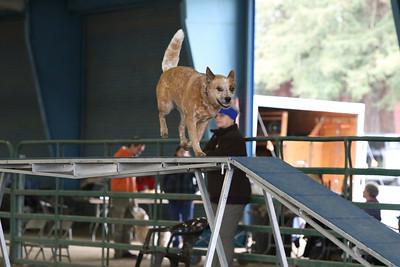 3-10-2019 Bloodhound-9700