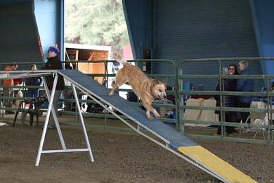 3-10-2019 Bloodhound-9703