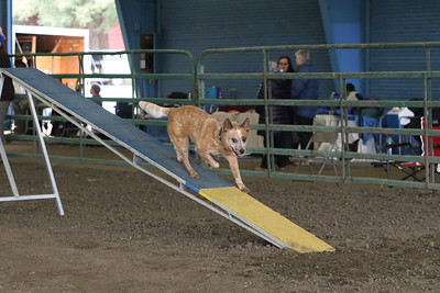 3-10-2019 Bloodhound-9704
