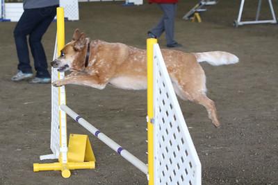 3-10-2019 Bloodhound-9710