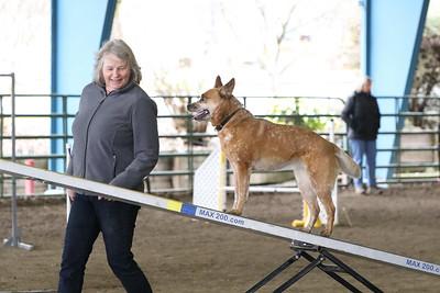 3-10-2019 Bloodhound-9716