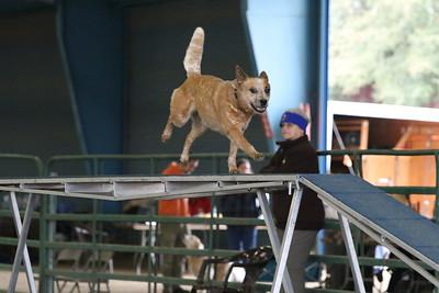 3-10-2019 Bloodhound-9699