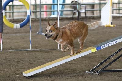 3-10-2019 Bloodhound-9718