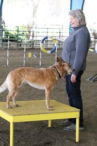 3-10-2019 Bloodhound-9722