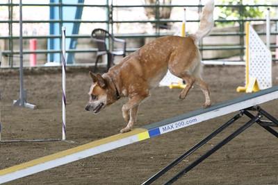 3-10-2019 Bloodhound-9717